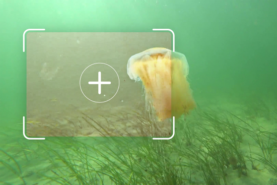 fraunhofer-igd-is-developing-underwater-image-enhancement-methods-based-on-artificial-intelligence.-c-fraunhofer-igd.jpg